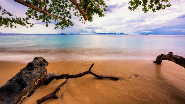 Bauhölzer auf dem strand mit baumasten, lange belichtung, glattes meer