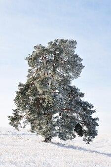 Baum allein