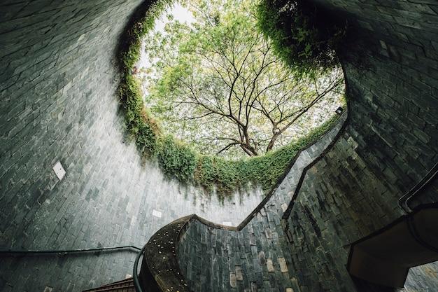 Baum am fort canning wahrzeichen, singapur