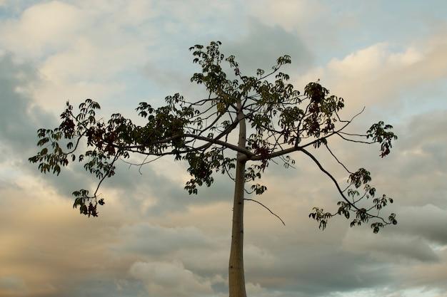 Baum am himmel