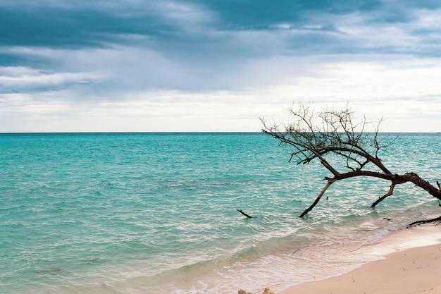 Baum am ufer des maledivischen strandes. dunkler, bewölkter und bedrohlicher himmel.