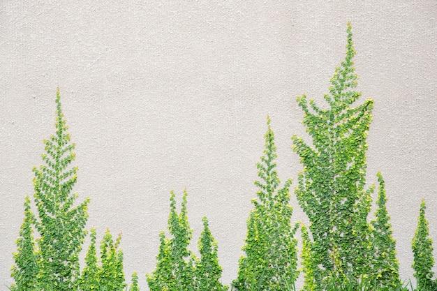 Baum an der wand