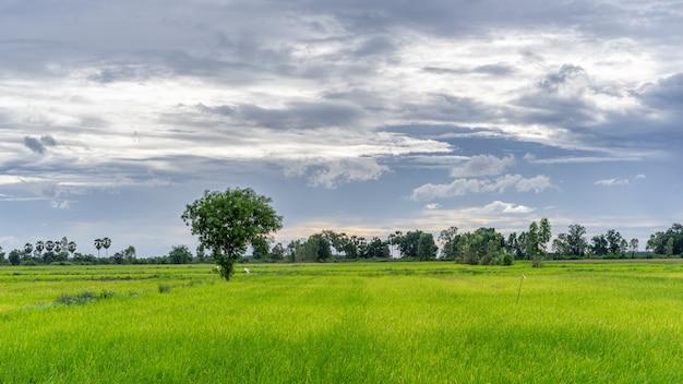 Baum auf dem grünen gebiet mit regenwolken in der landschaft