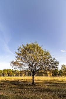 Baum auf einer wiese im sonnenlicht