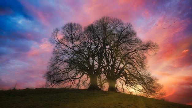 Baum auf grünem grasfeld während des sonnenuntergangs