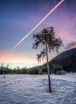 Baum auf schneebedeckter wald-lichtung unter klarem himmel