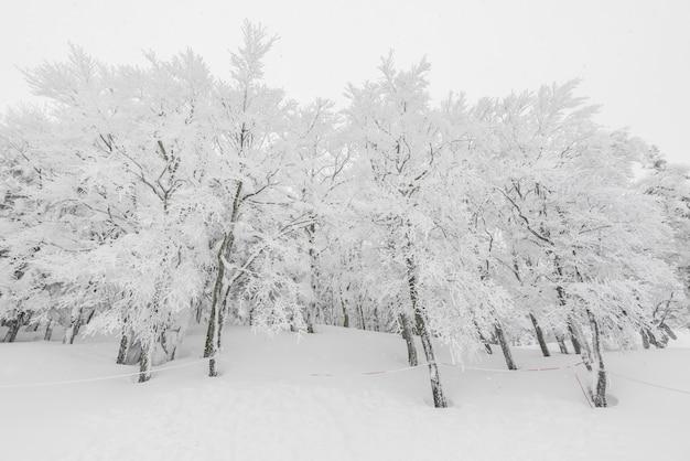 Baum bedeckt mit schnee auf winter sturm tag in wald berge