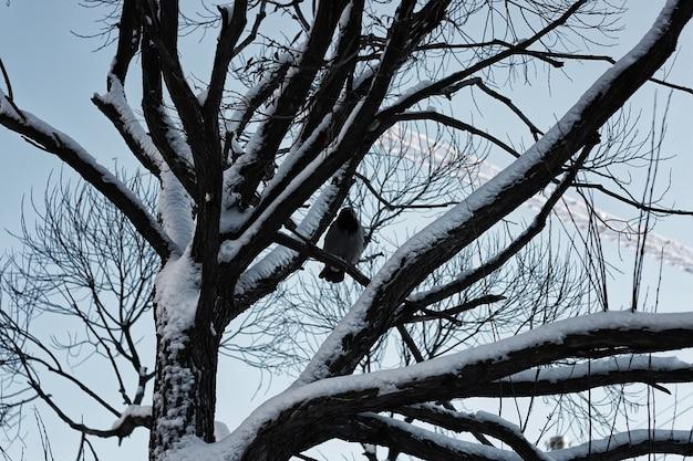 Baum birke kahl winter himmel