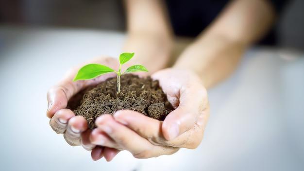Baum, der auf boden in der hand der frau für das speichern der weltumgebung pflanzt
