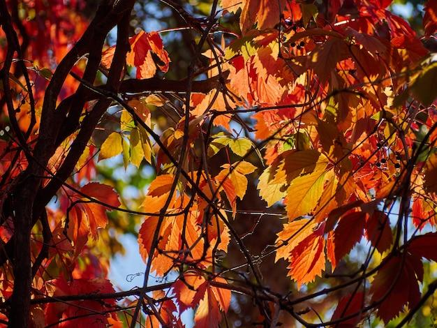 Baum herbstblätter gelb roten himmel verzweigt hintergrund