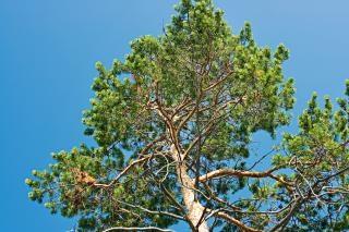 Baum, himmel, frühling