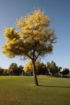 Baum im dubai creek park
