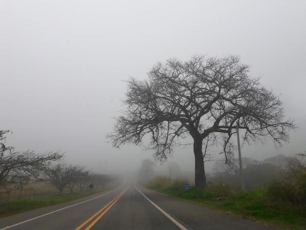 Baum im nebel der straße