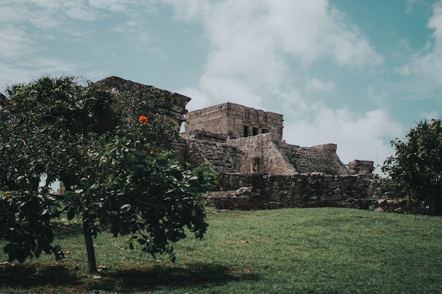 Baum in den tulum ruinen