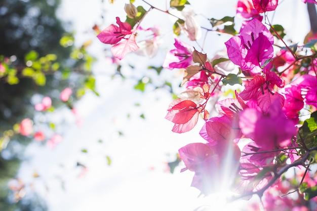 Baum in der blüte mit sonnenstrahlen