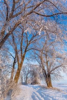 Baum in der winterstraße. frostige morgendämmerung über den feldern.