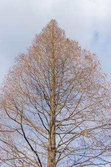 Baum in einem park