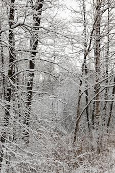 Baum in einem wald unter schnee, kahle äste mit weißen kristallen aus schneeflocken und eis bedeckt, details der winterperiode