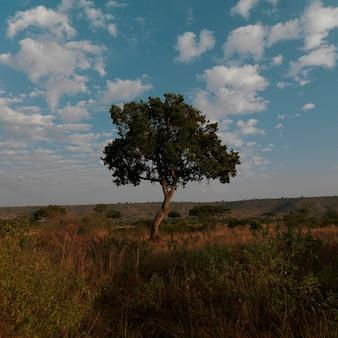 Baum in kenia afrika