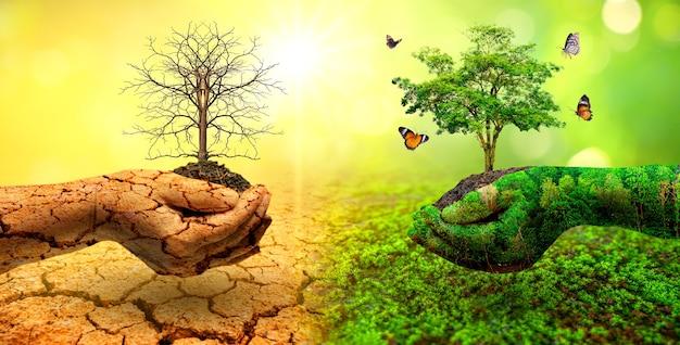 Baum in zwei händen mit sehr unterschiedlichen