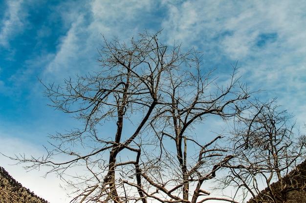 Baum kalam swat-landschaftslandschaft