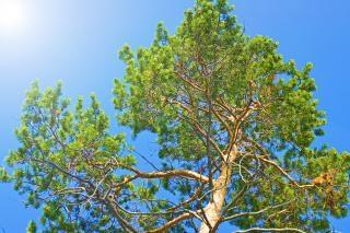 Baum, landschaften