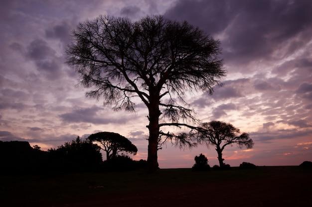 Baum mit einer transparenten krone auf einem sonnenunterganghintergrund