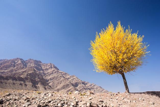 Baum mit gelben blättern in der herbstsaison