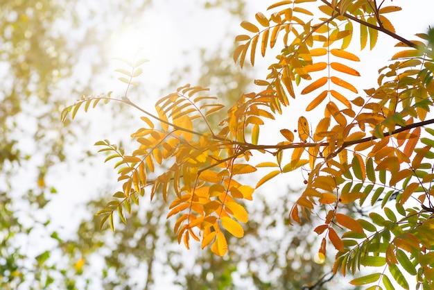Baum mit gelben, roten und grünen blättern im herbst