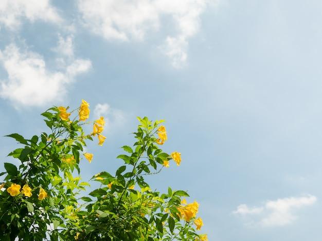 Baum mit grünen blättern und gelben blüten