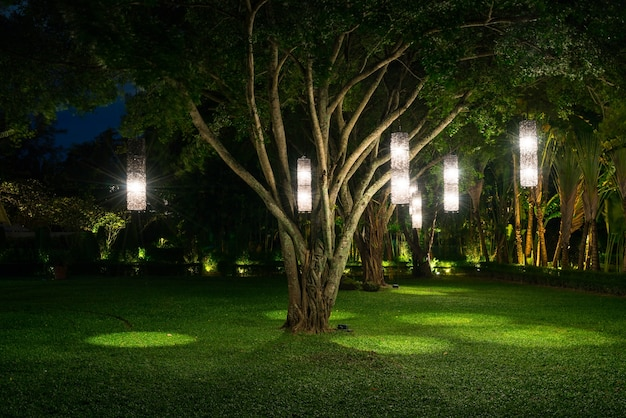 Baum mit lampenbeleuchtung