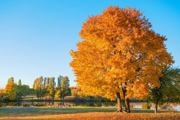 Baum mit orangefarbenem herbstlaub auf dem see