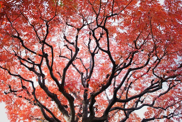 Baum mit rot lässt hintergrundansicht der unteren ansicht