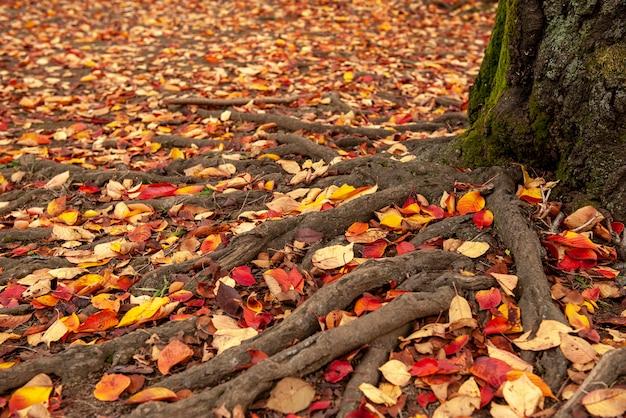 Baum mit roten blättern im herbsthintergrund