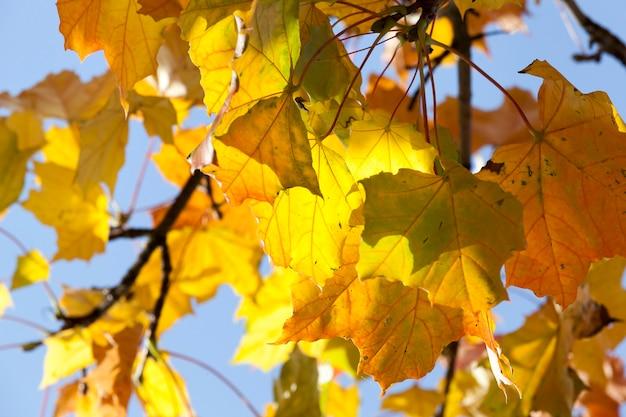 Baum mit roten und gelben blättern an einem sonnigen herbsttag