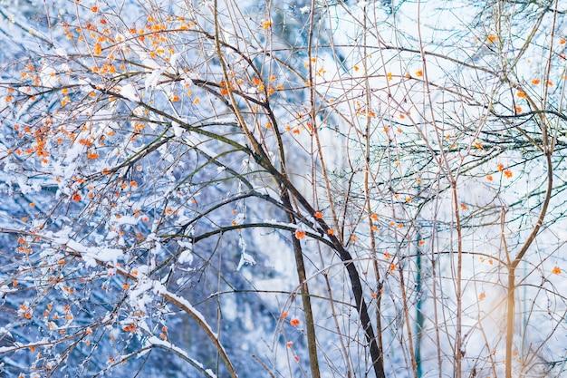 Baum mit schneebedeckten beeren im winterpark