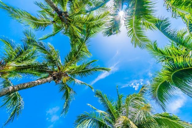 Baum palme mit himmel im hintergrund