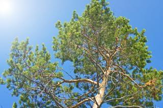 Baum-, pflanzen