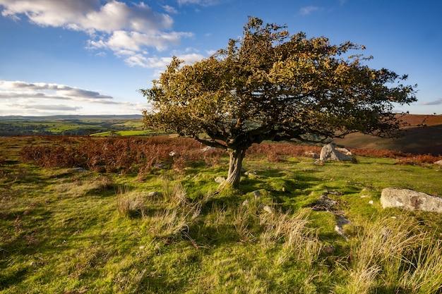 Baum umgeben von grün unter dem sonnenlicht im dartmoor-nationalpark, devon, großbritannien