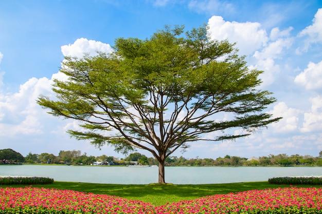 Baum- und blumenbeet mit hintergrund des blauen himmels.