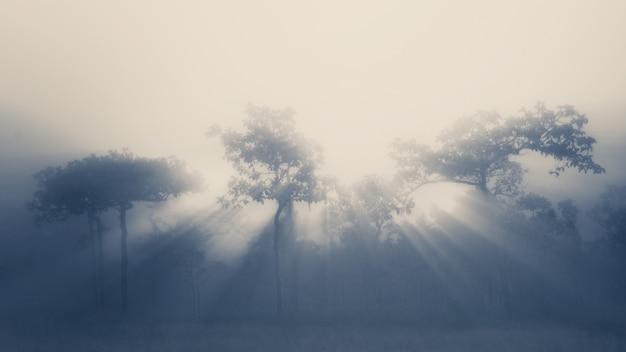 Baum und lichtstrahl