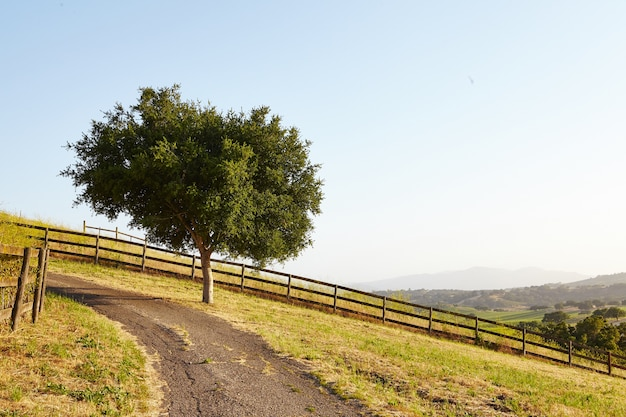 Baum von dirt road