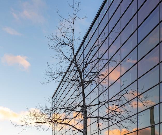 Baum vor dem bürogebäude
