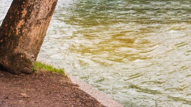 Baum wächst durch wasser