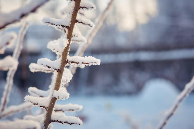 Baumaste am sonnigen wintertag des schnees.