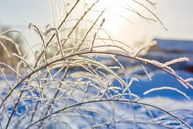 Baumaste im frost auf einem hintergrund des blauen himmels.