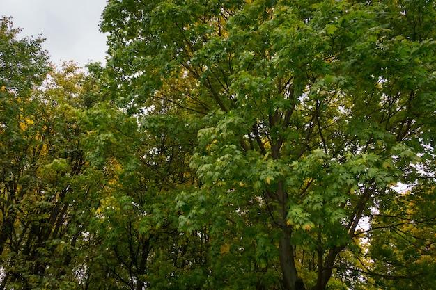 Baumaste im herbstpark