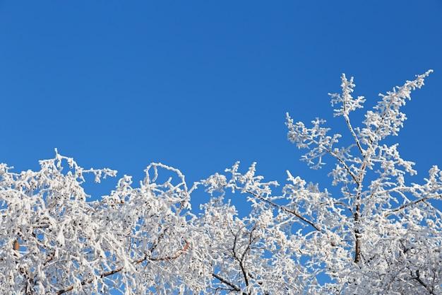 Baumaste schließen oben umfasst mit weißfrost auf blauem himmel