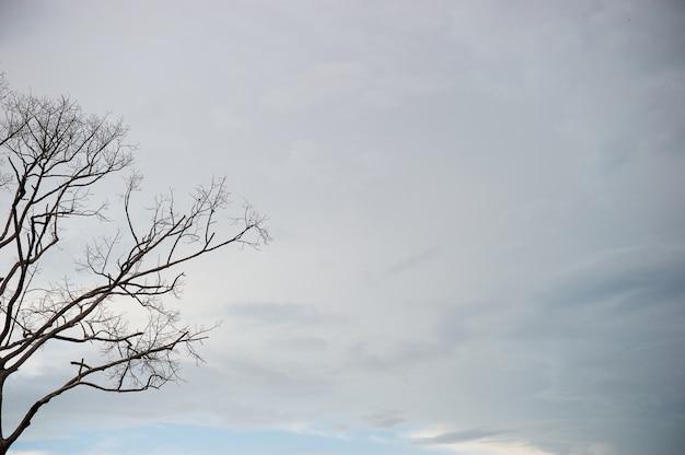 Baumaste und himmel im sommer. bei sonnenuntergang