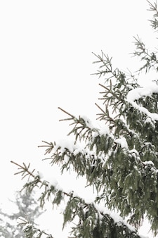 Baumblätter und tageslicht winterhimmel